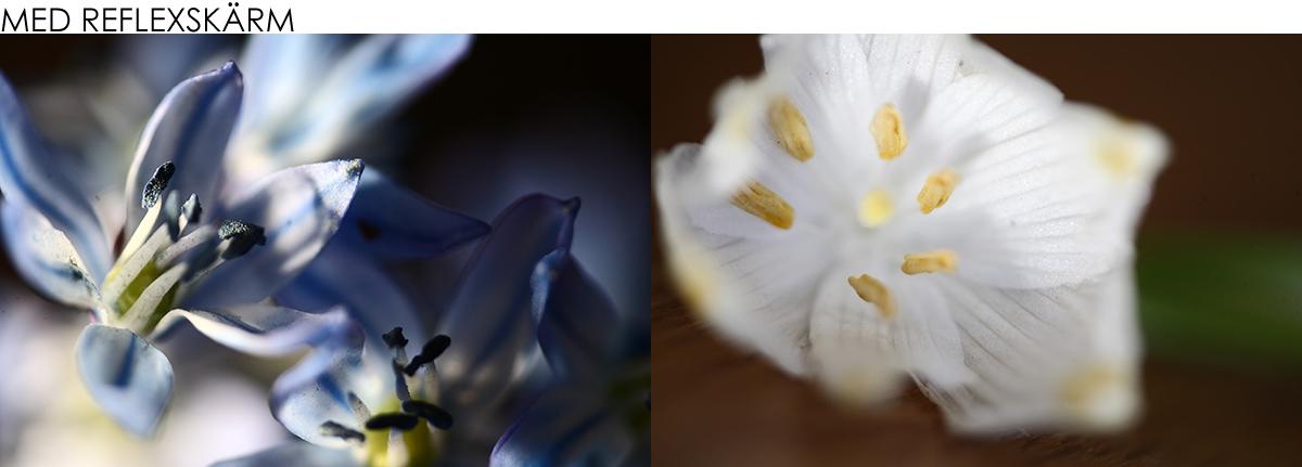 Blomma fotograferad med Reflexskärm
